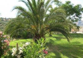 Jardín con palmeras, plantas y flores