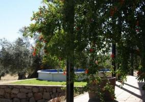 Vistas de las zonas exteriores con olivos