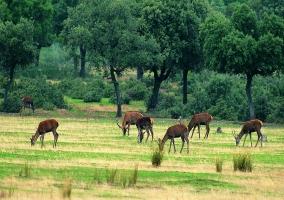 Parque Natural de Cabañeros
