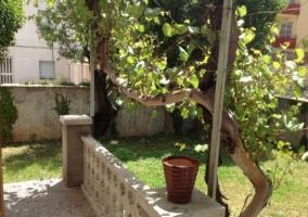 Árbol en el jardín