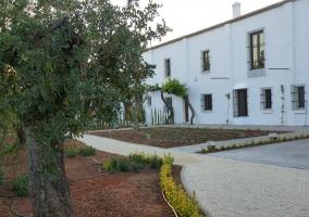 Jardines y olivo