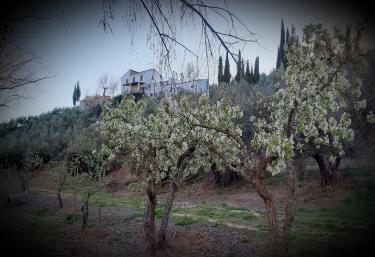 Cortijo El Capricho - Villacarrillo, Jaén