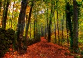 Camino  entre hayedos