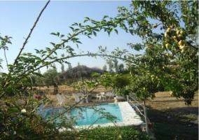 Vista de la piscina entre plantas