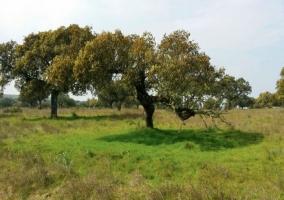 Árboles de la zona