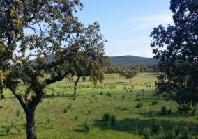 Vegetación alrededores