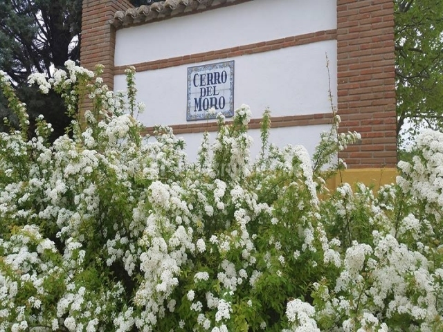 Cerro del Moro