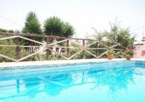 Vistas de la piscina con plantas al lado
