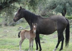 Entorno caballos