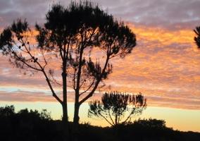 Zoan perfecta para las puestas de sol
