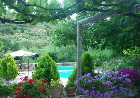 Jardín repleto de plantas