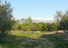 Campo que rodea la casa rural