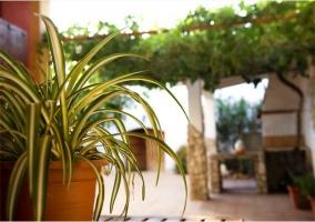Plantas en el exterior de la casa rural con barbacoa