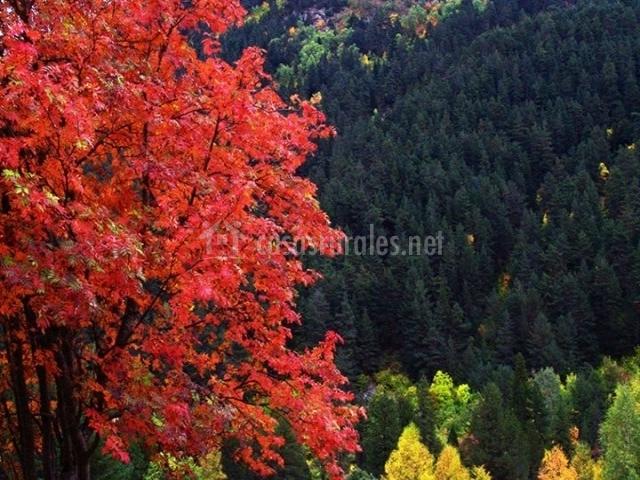 Los colores del otoño en Gredos