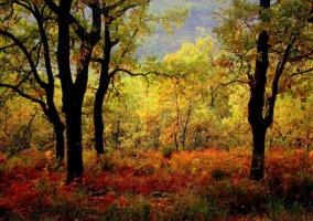 Bosques de la Sierra de Gredos