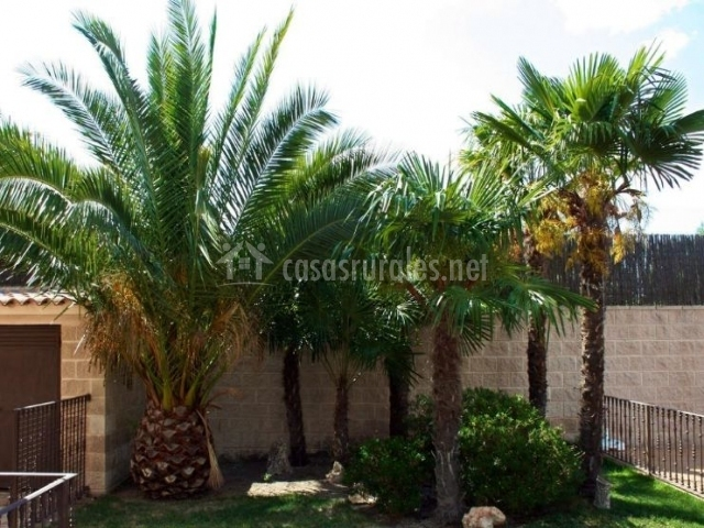 Vistas de las zonas verdes y las palmeras