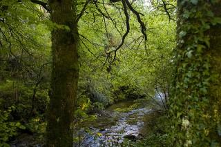 El bosque de Muniellos, una joya natural