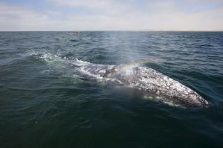 Lugares para el avistamiento de cetáceos en España