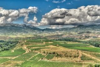 Recorrido por las mejores bodegas de La Rioja
