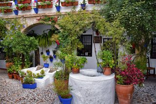 Una visita a la Fiesta de los Patios de Córdoba