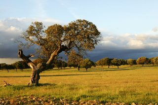 Parajes naturales más espectaculares de Extremadura