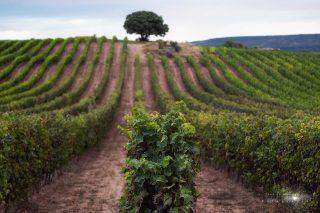 Las mejores casas rurales de La Rioja