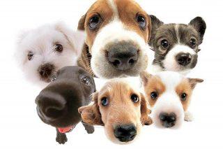 10 casas rurales para ir de vacaciones con tu perro
