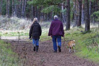 7 rutas de senderismo con perros