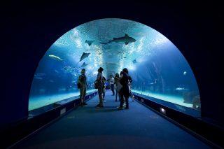 Los 5 mejores acuarios de España