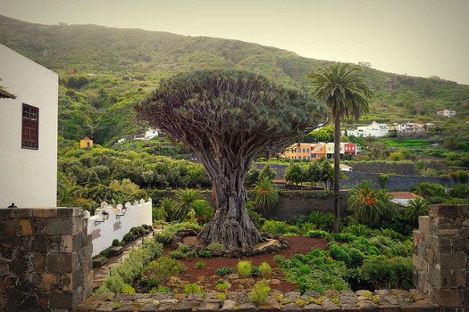 What to see in Canary Islands