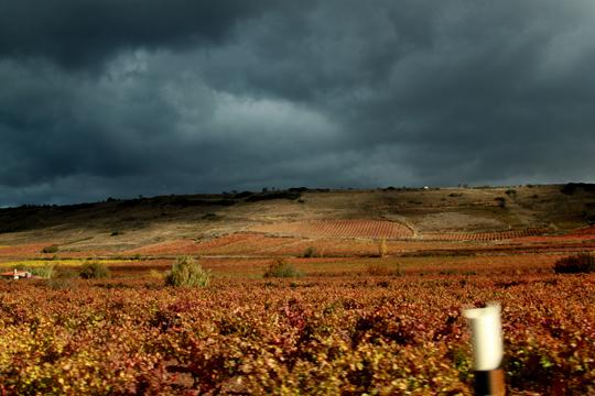 Les choses à faire à La Rioja